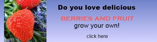 how to grow fruit