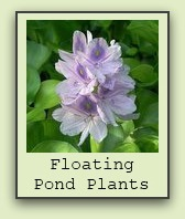 floating-pond-plants