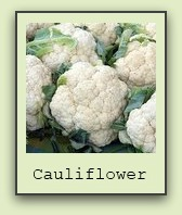 growing-cauliflower