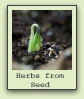 growing-herbs-from-seeds