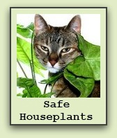 house-plants-safe-for-cats