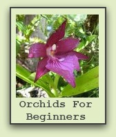 growing-orchids-for-beginners