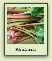 growing-rhubarb
