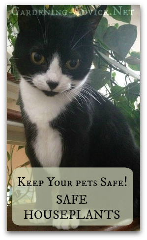 house plants safe for cats