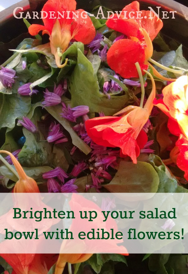 Add Edible Flowers To Your Salad Bowl