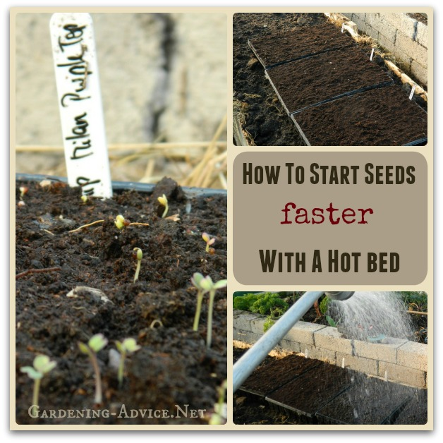 how to start seeds with a hot bed collage