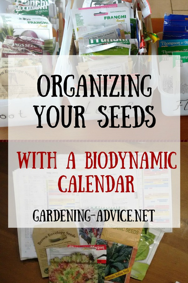 How To Organize Your Vegetable Garden Seeds