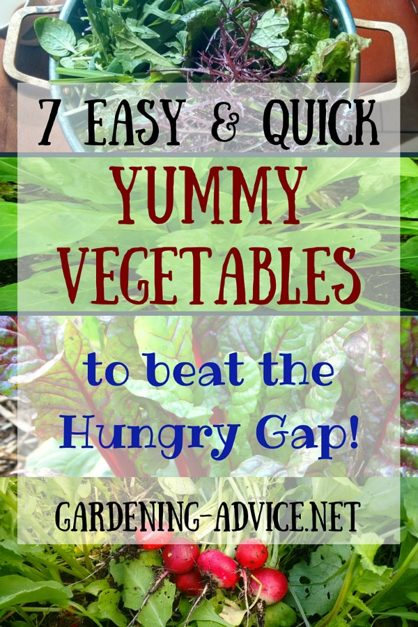 7 Easy To Grow Vegetables To Beat The Hungry Gap