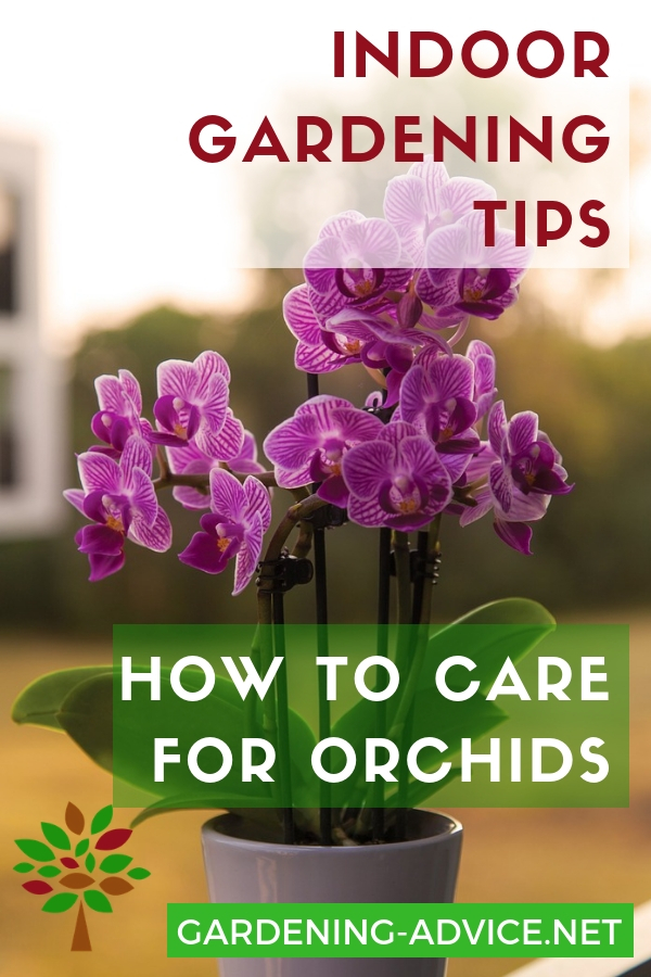 How To Care For Orchids #gardening #gardeningtips #houseplants  #houseplantcare #indoorgardening #plants #orchids #orchidcare