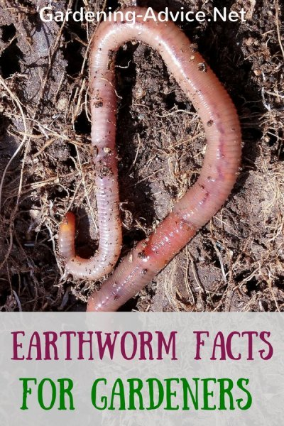earthworm facts for gardeners