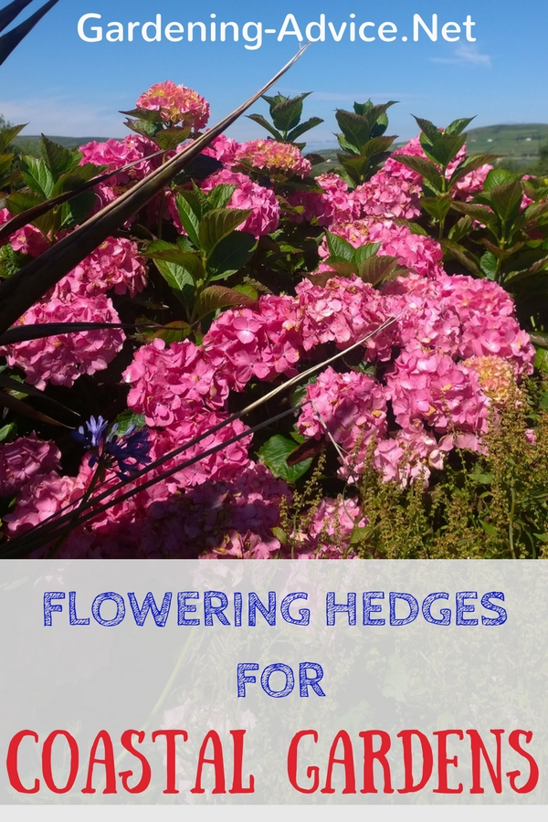 Flowering Hedges For Coastal Gardens