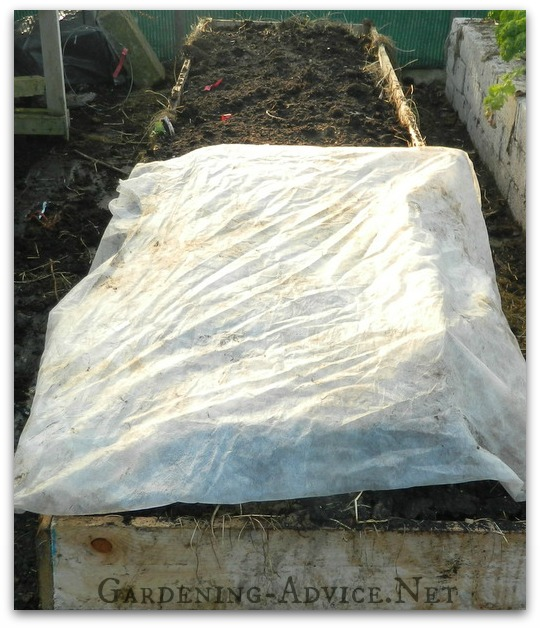 hot bed seedgrowing with horticultural fleece