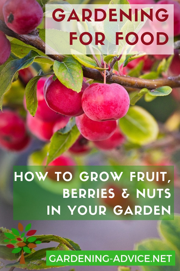 How to grow fruit, berries and nuts in your backyard #gardening #gardeningtips #permaculture  #homesteadgarden #organicgardening #homesteading #urbangardening #vegetablegardening #growingfood