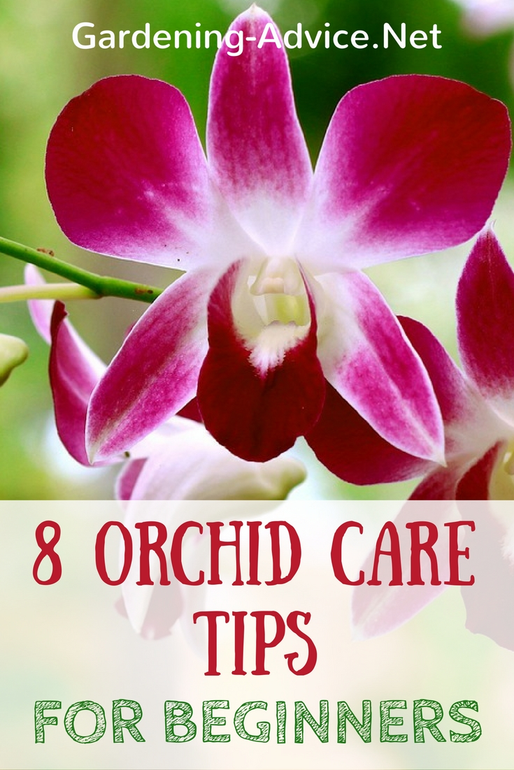 beginners guide to orchids Aboutorchidscom provides a guide for basic orchid care with information about watering, light, humidity, fertilizing, temperature, air flow, identifying your orchid, treating pests and diseases, and repotting your orchid.
