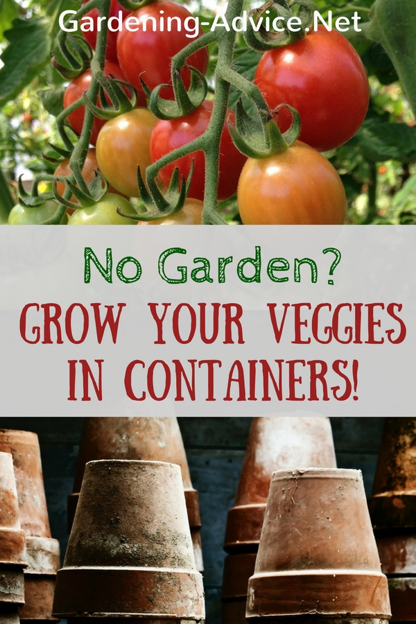 grow your veggies in containers