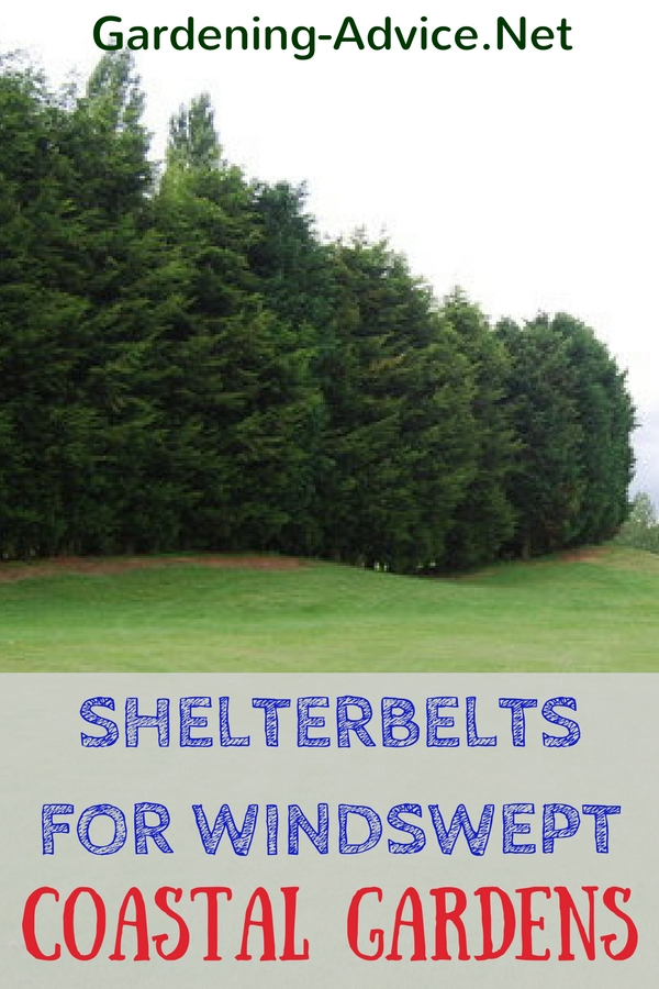 Shelterbelts For Windswept Coastal Gardens