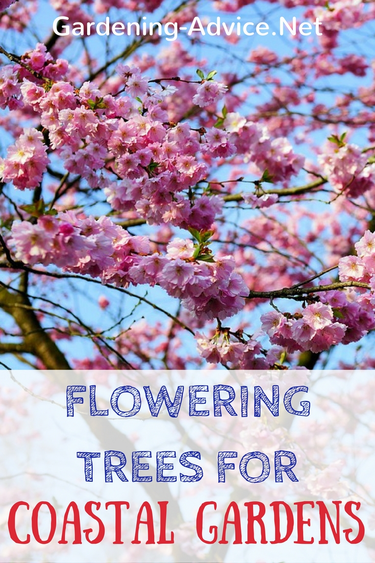 A List Of Flowering Trees For Coastal Gardens #gardeningtips #gardening #coastalgarden #trees