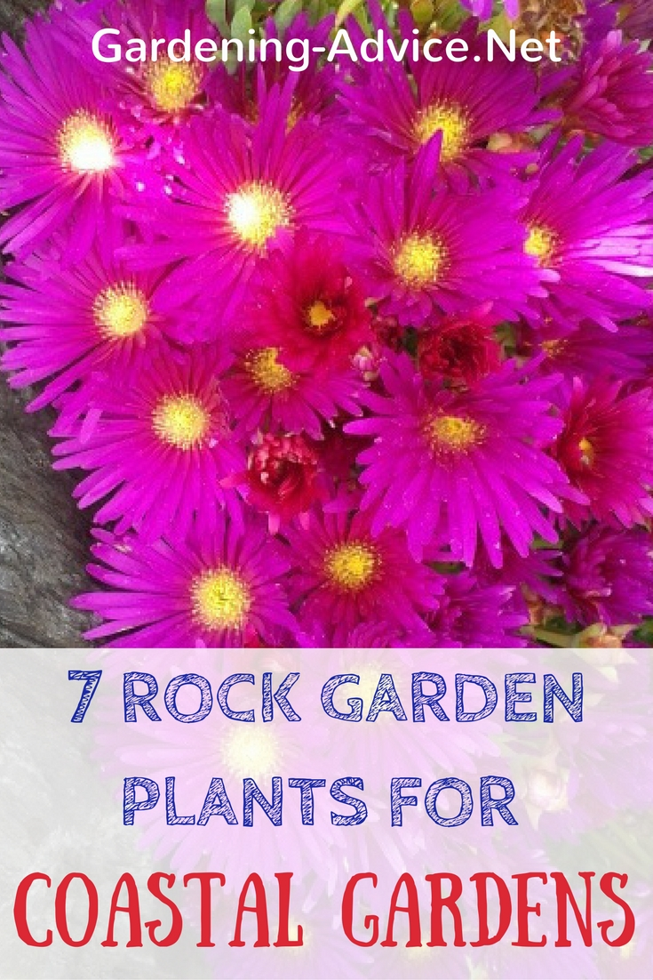 7 Rock Garden Plants For Coastal Gardens