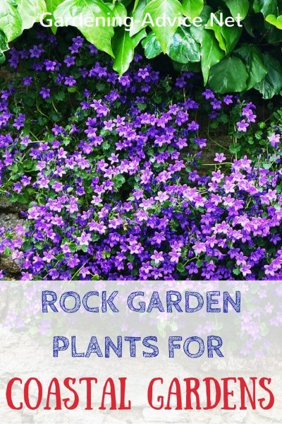 Rock Garden Plants are great groundcover plants for seaside gardens.  #gardeningtips #coastalgarden #gardening #flowergardening