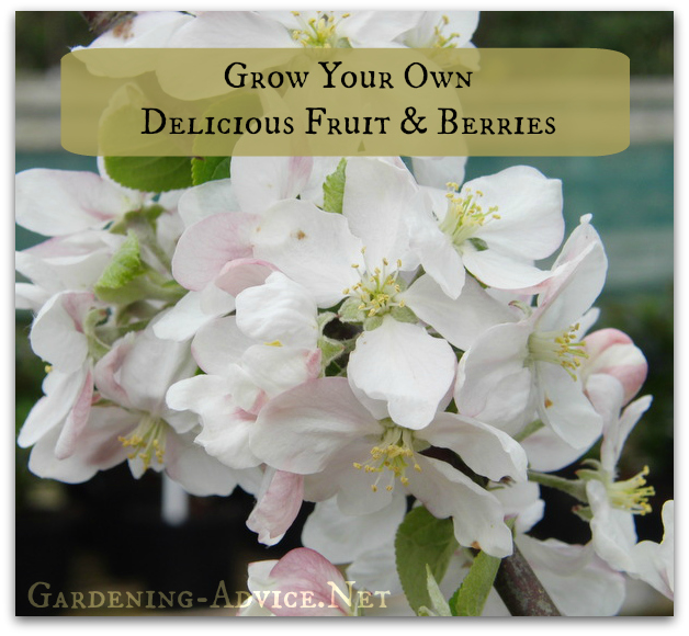 grow your own fruit and berries