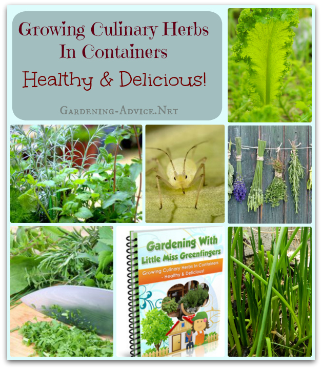 growing culianry herbs ebook collage