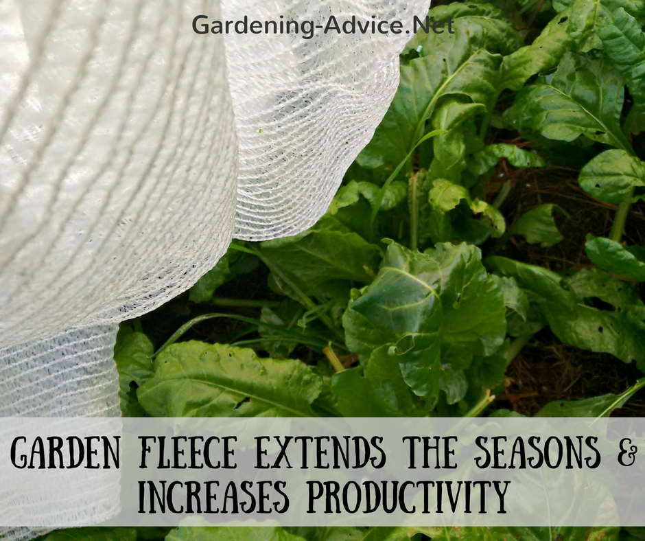 garden fleece on spinach