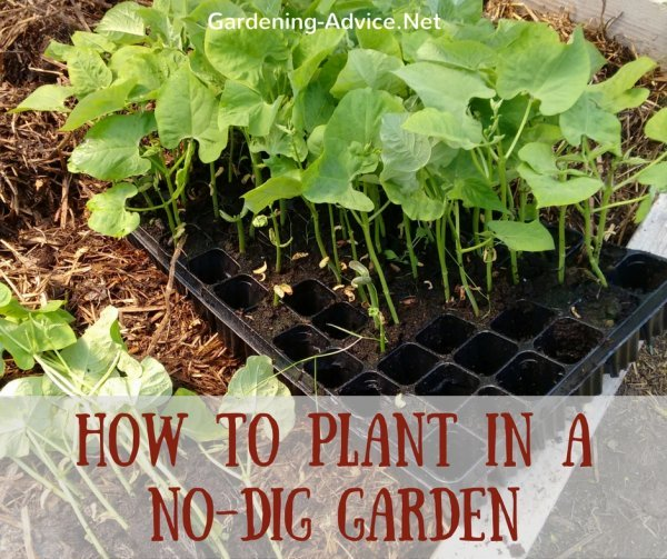How To Plant In A No Dig Garden
