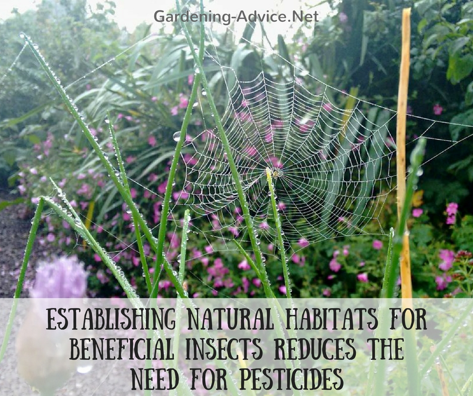 natural habitats for beneficial insects