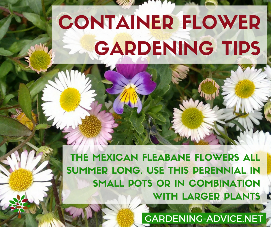10 Perennial Flowering Plants For Container Gardening #gardeningtips #gardening #containergardening #flowergardening #gardenideas