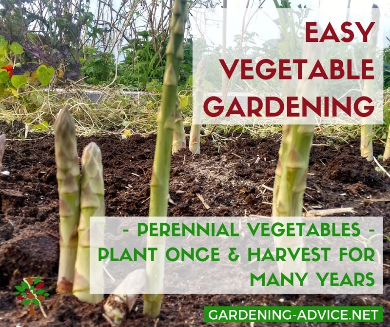 Perennial vegetables make gardening easier #gardening #gardeningtips #permaculture  #homesteadgarden #organicgardening #homesteading #urbangardening #vegetablegardening #growingfood