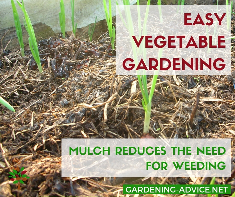 Mulching saves time in the garden #gardening #gardeningtips #permaculture  #homesteadgarden #organicgardening #homesteading #urbangardening #vegetablegardening #growingfood
