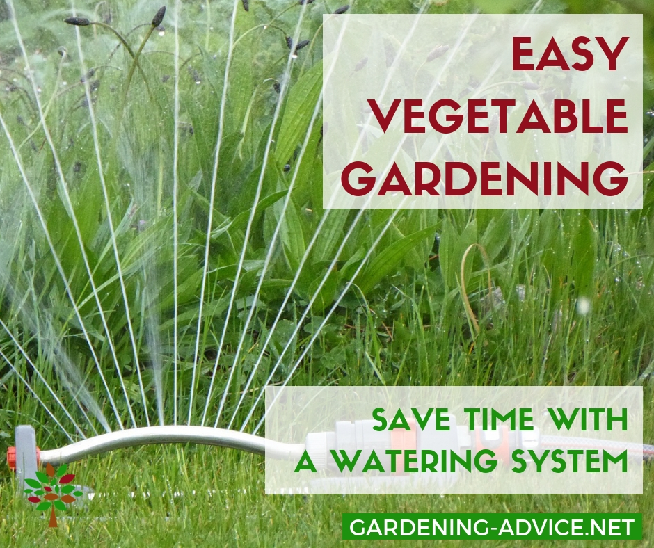 Watering systems save time in the garden #gardening #gardeningtips #permaculture  #homesteadgarden #organicgardening #homesteading #urbangardening #vegetablegardening #growingfood