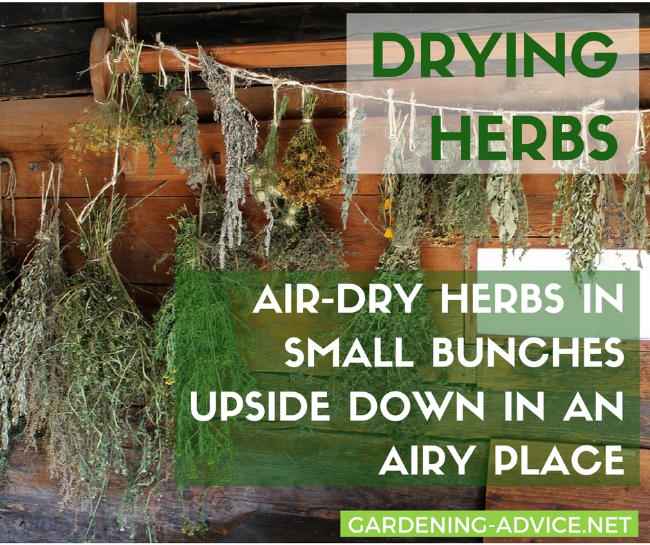 Preserve garden herbs through drying, freezing or marinating. #gardeningtips #herbgardening #herbs #gardening #homesteading #urbangardening #organicgardening