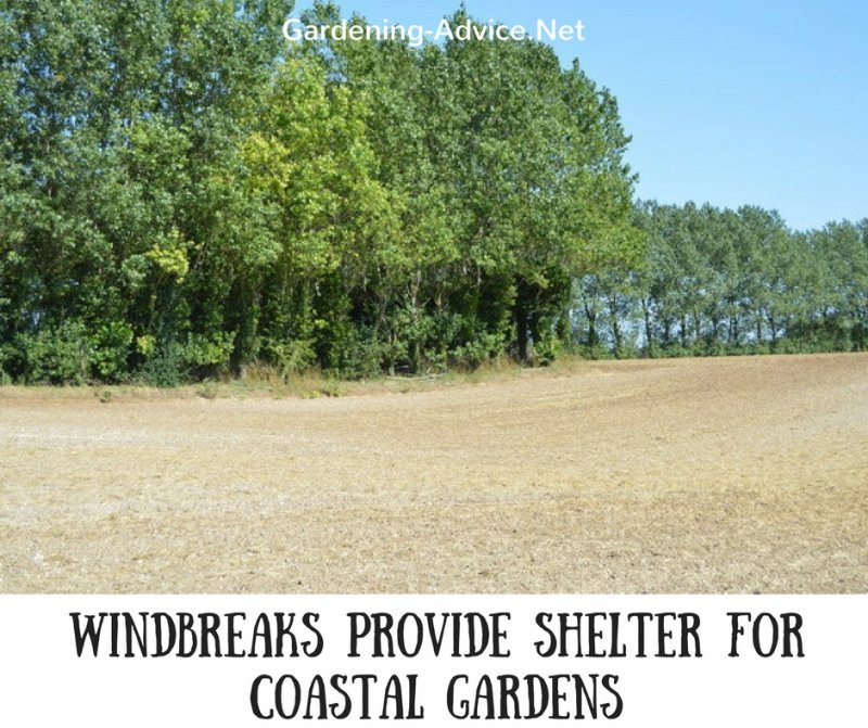 Windbreaks Provide Shelter For Coastal Gardens