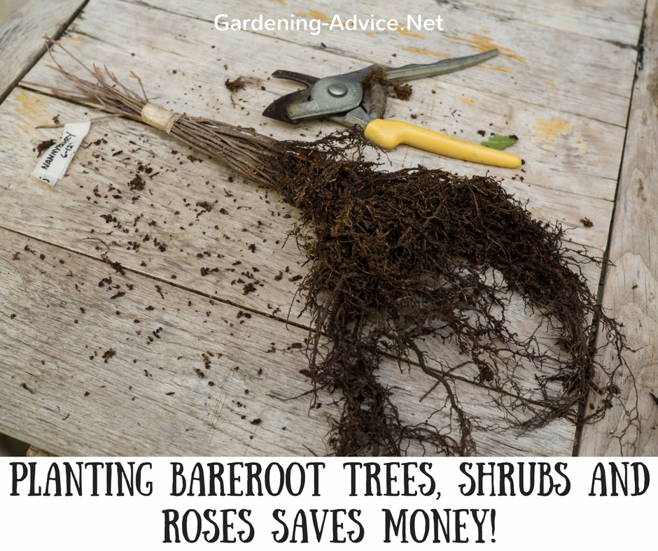 Plant Bare Root Trees, Fruit And Hedging while they are dormant during the winter.