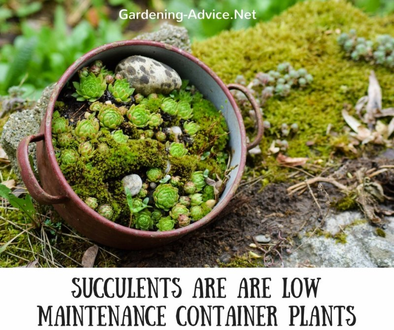 Succulents In Containers