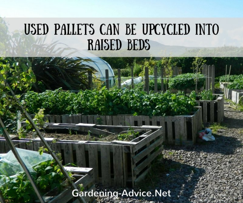 raised bed from reused pallets