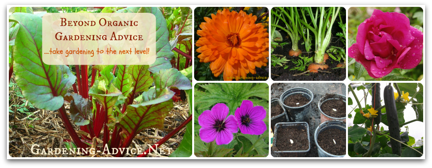 Beyond organig gardening advice collage