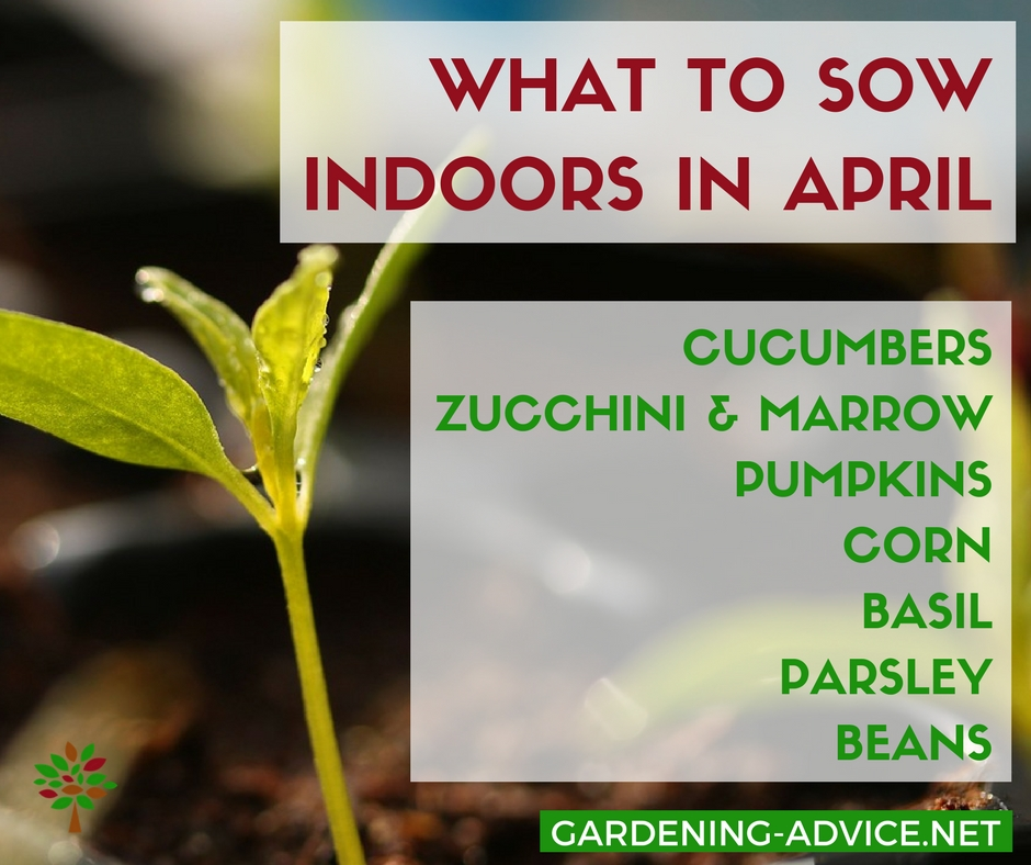 What to sow indoors in April  #gardening #organicgardening #vegetablegardening #homesteading #homesteadgarden #urbangardening