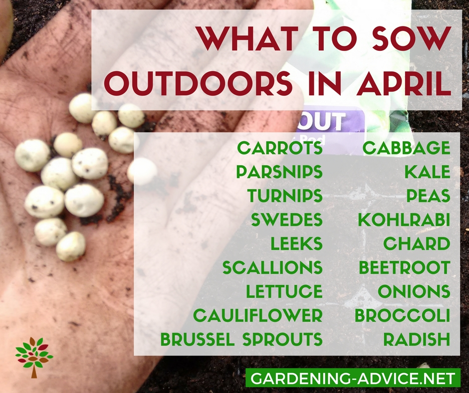 What to sow outdoors in April #gardening #organicgardening #vegetablegardening #homesteading #homesteadgarden #urbangardening