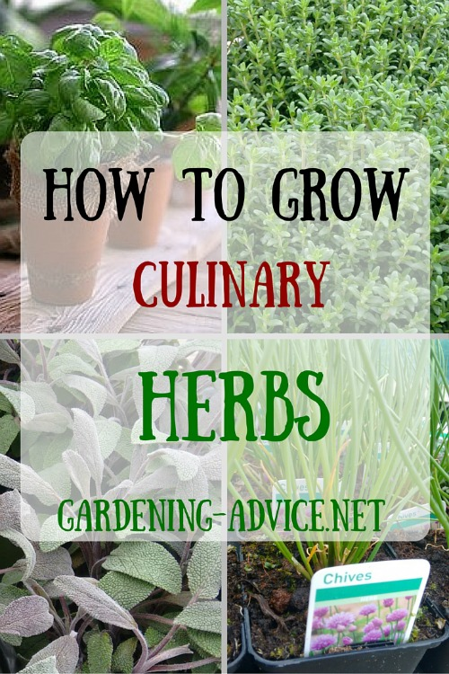 Planting Herbs For A Basic Herb Garden You can have herbs nearly
