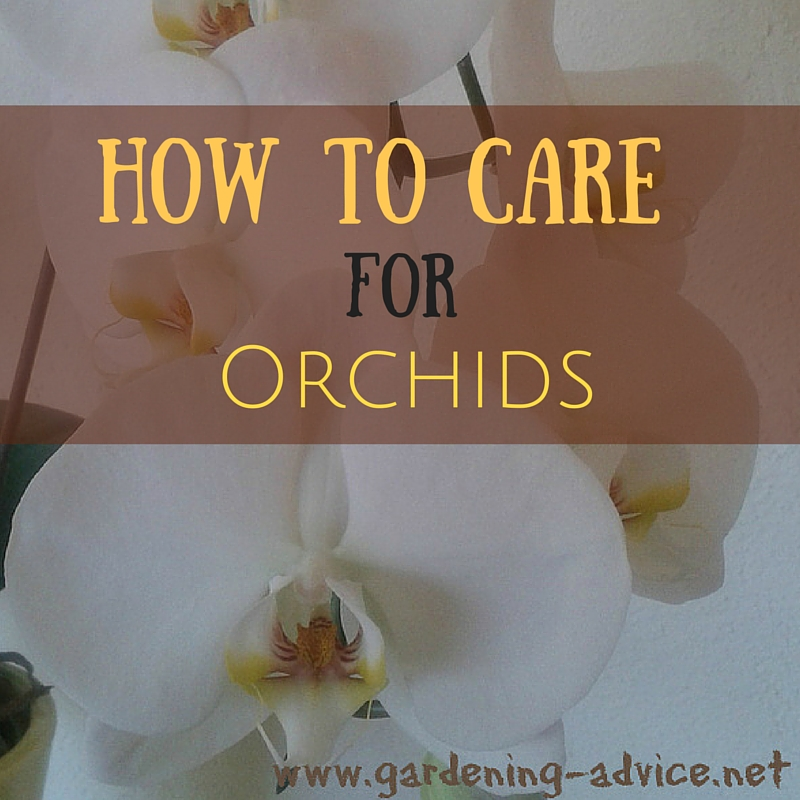 caring for orchid plants