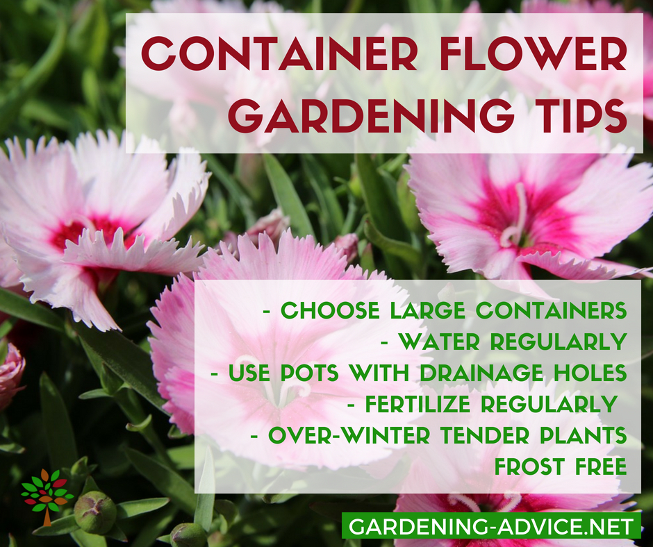 Container Flower Gardening Tips For Success