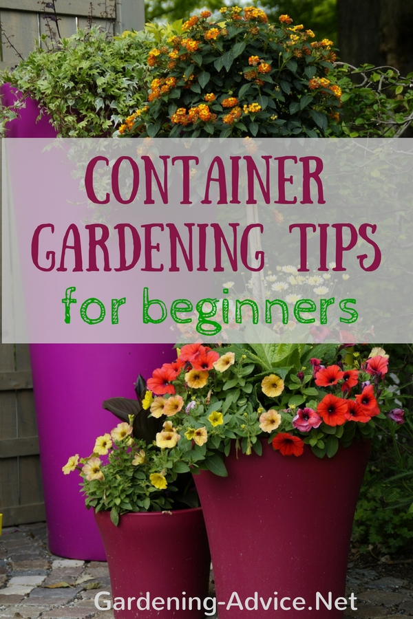 Container gardening tips for beginners for Gardening tips