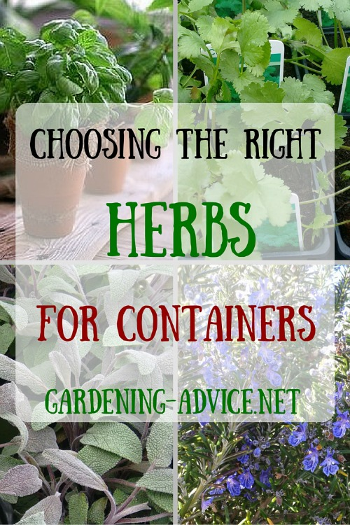 Choosing The Right Herbs For Containers
