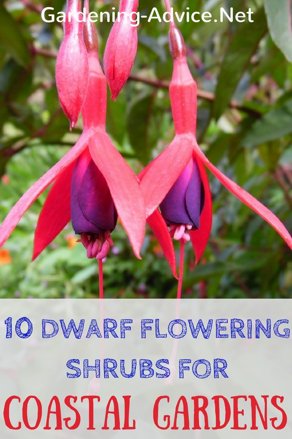 10 Dwarf Flowering Shrubs For Coastal Gardens