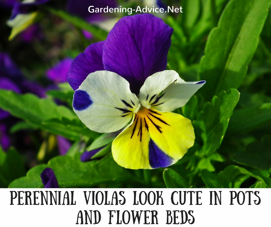 Try these 8 easy perennials to add beautiful color to your garden without much work! #gardeningtips #coastalgarden #flowergardening #gardening