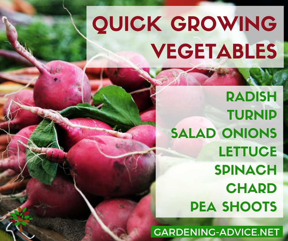 7 Easy To Grow Vegetables To Beat The Hungry Gap #gardeningtips #organicgardening #permaculture #homesteading #urbangardening #vegetablegardening