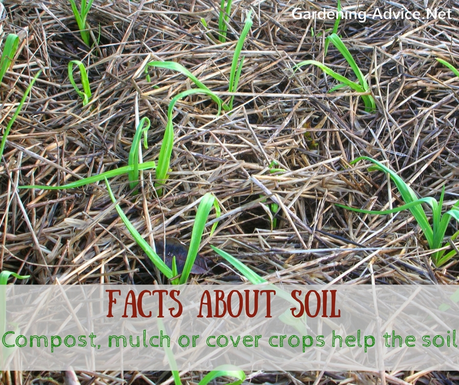 Facts about soil every gardener should know for All about soil facts