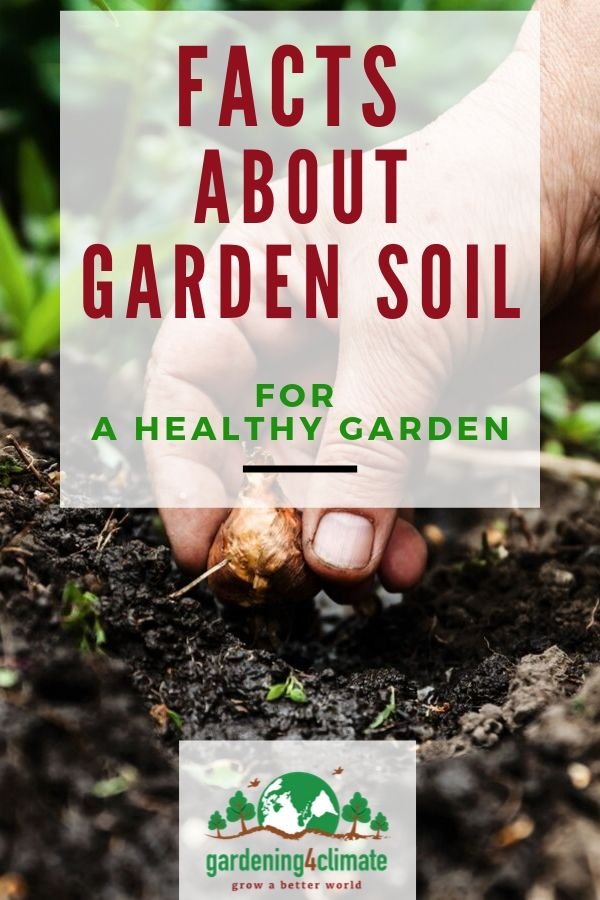Facts About Soil Every Gardener Should Know